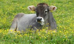 Produtores de leite super eficientes distanciam-se em produtividade diante da média do setor no país