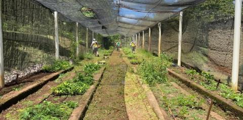 Prefeitura inicia revitalização do Viveiro Municipal Chico Flor