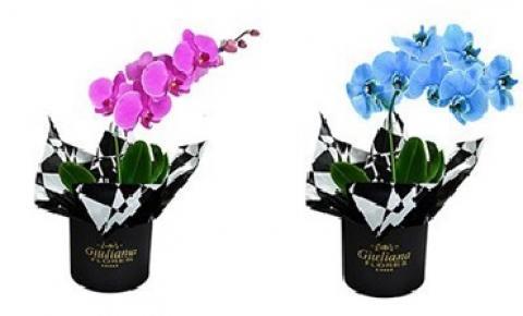 Orquídeas: conheça o significado de cada uma de suas cores