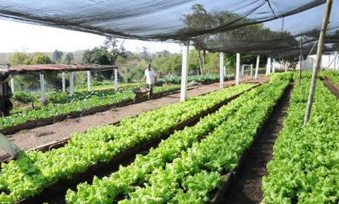 Agricultura: como iniciar um horta orgânica?