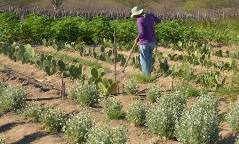Produtores rurais têm até 31 de dezembro para aderir ao Cadastro Ambiental Rural