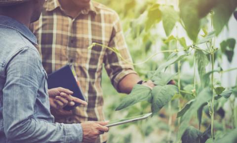 Tecnologia para otimizar o agronegócio no Brasil