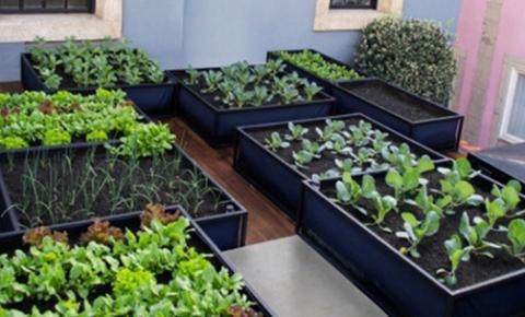 Horta inteligente caseira é uma opção para quem não tem experiência com cultivo