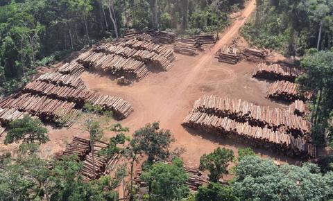 Geral PF apreende 43,7 mil toras de madeira ilegal no Pará